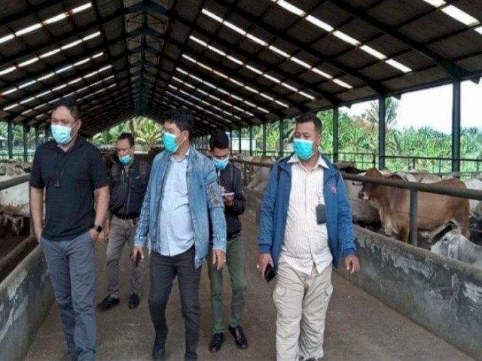 Mantul! Sumatera Utara Peringkat Ke-8 Sebagai Daerah Produsen Daging Sapi