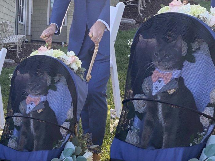 Viral Foto Kucing Peliharaan Didandani Setelan Jas Nikah, Duduk Anteng di Stroller Bayi