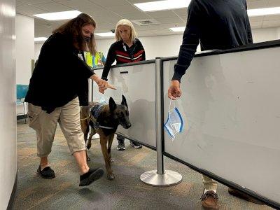 Bandara Miami akan Pakai Anjing Pelacak untuk Deteksi COVID-19, Jadi Pertama di AS!