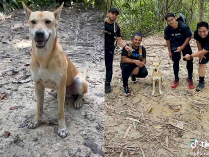 Anjing yang Dijuluki 'Pali' Viral di Twitter karena Jadi Pemandu untuk Para Pejalan Kaki